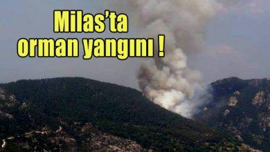 Photo of Milas'ta orman yangını