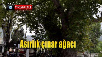 Photo of Asırlık çınar ağacı yerli ve yabancı turistlerin ilgi odağı