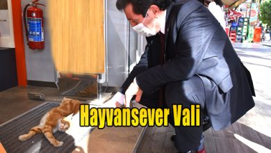 Photo of Hayvansever Vali