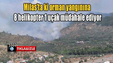 Photo of Milas'ta ki orman yangınına 8 helikopter 1 uçak müdahale ediyor
