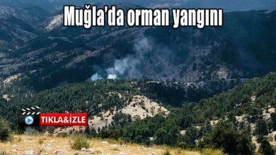 Photo of Muğla'da orman yangını