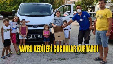 Photo of YAVRU KEDİLERİ ÇOCUKLAR KURTARDI