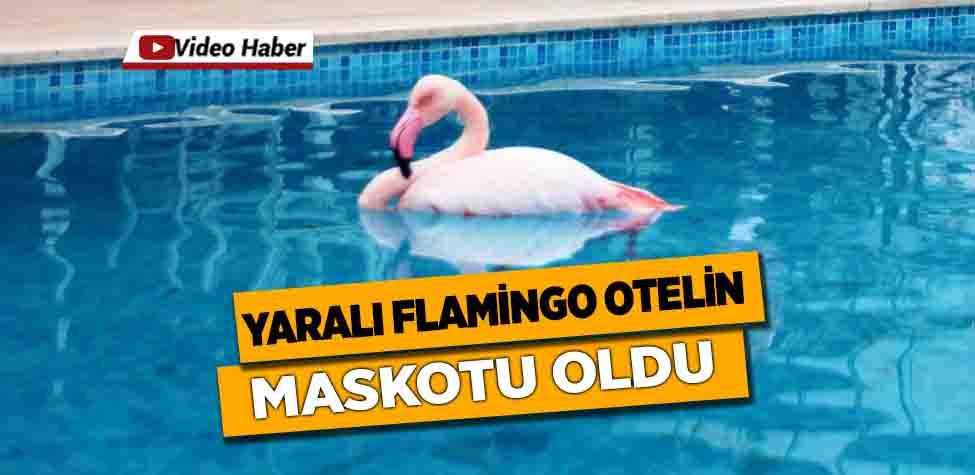 Otelin havuzuna düşen yaralı flamingoyu görenler şoke oldu