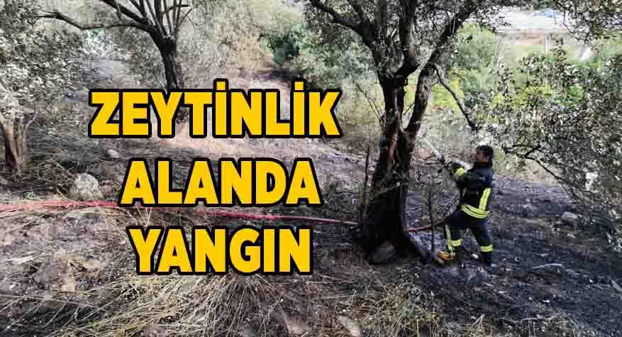 70 zeytin ağacı yandı