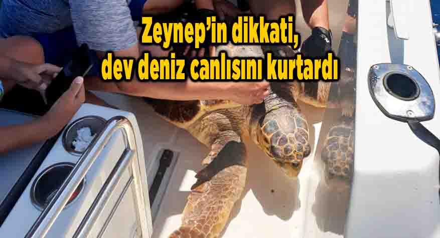 Zeynep'in dikkati, dev deniz canlısını kurtardı