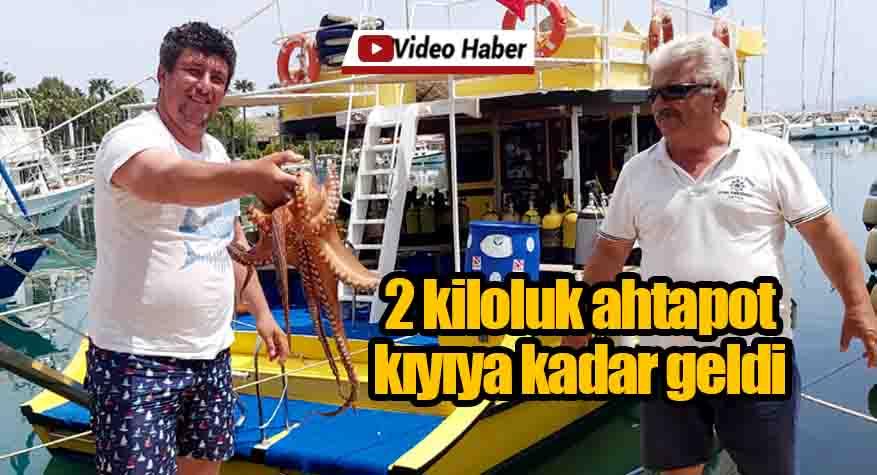 Tam kapanma deniz canlılarına yaradı, 2 Kiloluk ahtapot kıyıya kadar geldi