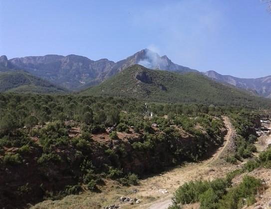 Ormanlık alandan yükselen dumanlar ekipleri seferber etti