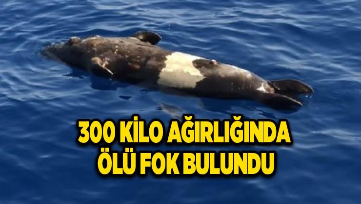 300 kilo ağırlığında ölü fok bulundu