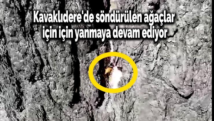 Kavaklıdere'de söndürülen ağaçlar için için yanmaya devam ediyor