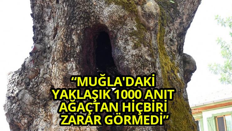 """""""MUĞLA'DAKİ YAKLAŞIK 1000 ANIT AĞAÇTAN HİÇBİRİ ZARAR GÖRMEDİ"""""""