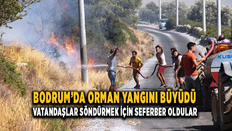 Bodrum'da yangın geniş bir alana yayıldı, vatandaşlar da seferber oldu