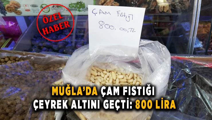 MUĞLA'DA ÇAM FISTIĞI ÇEYREK ALTINI GEÇTİ: 800 LİRA